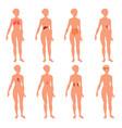 8 human body organ systems realistic educative vector image vector image