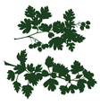 branch of hawthorn vector image vector image