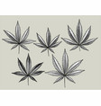 cannabis leaves set vector image