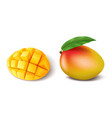 realistic ripe mango fruit whole with leaf and vector image vector image
