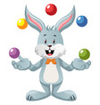 bunny juggling on white background vector image vector image