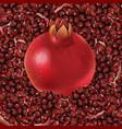 pomegranate and grain vector image