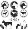 Set of premium beef labels badges and design