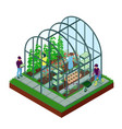 greenhouse isometric composition vector image vector image