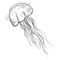 jellyfish drawing on white background vector image vector image