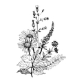 Vintage monochrome wildflowers watercolor vector image