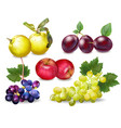 autumn fruits set realistic plums apple vector image