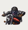 cruel gorilla biker vintage colorful concept vector image vector image