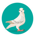 grey pigeon stands on ground vector image vector image