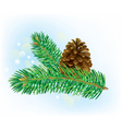 Branch of spruce with pine cone vector image
