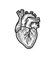 anatomical heart organ icon hand drawn style vector image