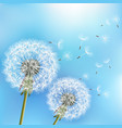 blue background with flowers dandelions vector image vector image