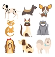 Collection of Cats and Dogs Different Breeds vector image vector image