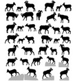 collection silhouettes bighorn sheeps rams vector image vector image