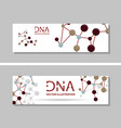 genetics testing science dna double spiral vector image vector image