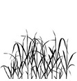 grass plants vector image vector image