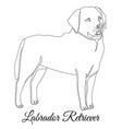 labrador retriever dog outline vector image vector image