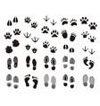 animal and human prints set vector image vector image