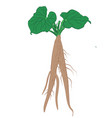 burdock roots with leaves isolated vector image