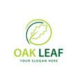 oak leaf logo vector image vector image