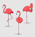 set pink flamingos bird in different poses vector image vector image