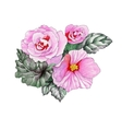 Watercolor blooming pink roses flowers vector image