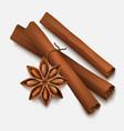Cinnamon vector image