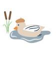 cute cartoon duck on a pond vector image