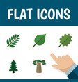 flat icon nature set of linden acacia leaf park vector image vector image