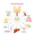 hormones hyroid gland vector image vector image