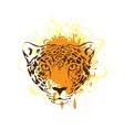 Leopard jaguar vector image vector image