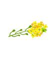 rapeseed flowers cartoon vector image vector image