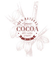 type emblem over hand drawn cocoa tree vector image vector image