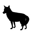 coyote silhouette vector image vector image