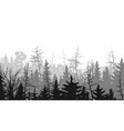 horizontal of coniferous wood vector image vector image