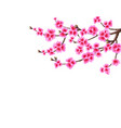 sakura a branched curved branch of a blossoming vector image vector image