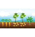 Many vegetables growing on the farm vector image