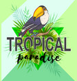 palm leaves and toucan bird vector image