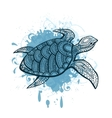 Stylized turtle vector image
