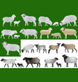 collection of farm animals - sheeps rams and lamb vector image