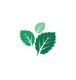 Mint leaves flat icon