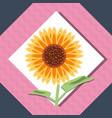 beautiful sunflower icon vector image