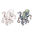 octopus seafood sea animal squid with tentacles vector image