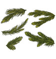 set of realistic detailed christmas tree branches vector image vector image