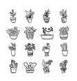 cute pots with blloming housplants and cactus vector image vector image