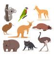 set funny cartoon australian animals - emu vector image