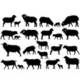 collection of silhouettes of sheeps rams and lambs vector image vector image