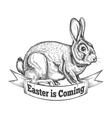 Hand Drawn Easter Bunny vector image vector image