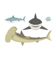 shark character vector image vector image
