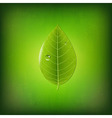 Grunge Green Background With Green Leaf vector image